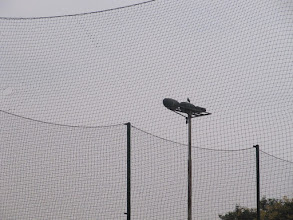 Photo: the nets, light post and the ...bird on it