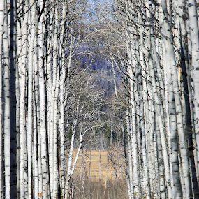by Ron Harper - Landscapes Forests ( wy )