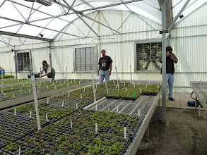Photo: Siggi, Mike Rinck and Brian at the AG3 nursery in Eustis (Florida). All plants are produced by tissue culture.