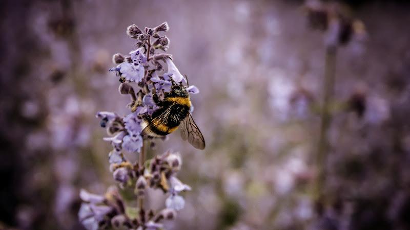 Piccoli insetti di francesco_boccolato