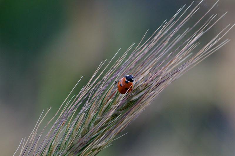 natura di IAphoto