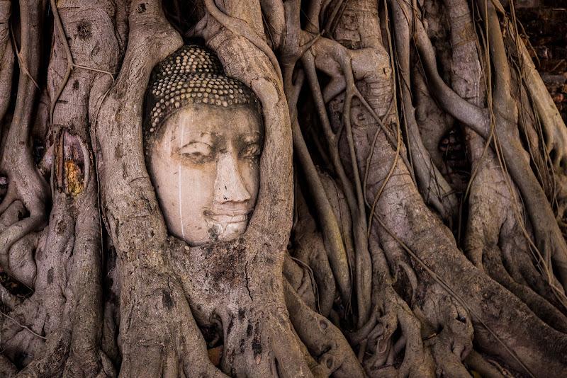 Il Buddha sacro di Nico Angeli Photography