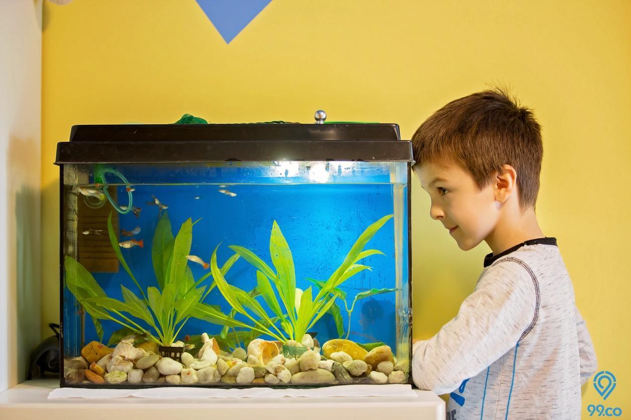 Filter Aquarium Agar Air Tetap Jernih