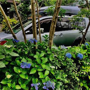 デリカD:5 CV5W SHAMONIX   H21のカスタム事例画像 緑川院   【さんげ】さんの2021年06月08日04:52の投稿