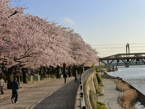 Photo: Sumida River Park
