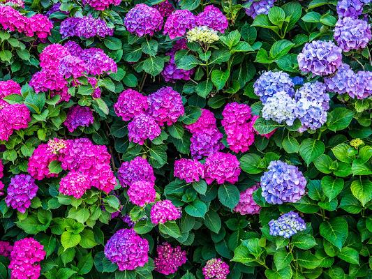 I giardini in fiore di anija