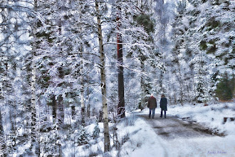 Photo: Walking in Norwegian Wood  ノルウェーの冬の森をてくてく散歩  #ForestFriday curated by +Rudolf Vlček