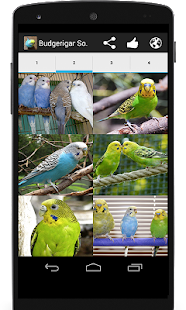 Budgerigar Sounds for Parakeet Screenshot