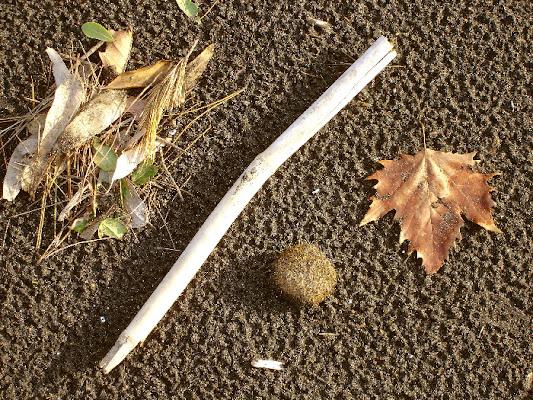 cornice d'autunno di david