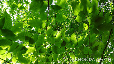 Photo: More leaves under the sun.