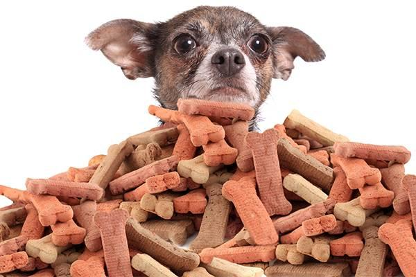 The Worst Dog Treats You Can Buy