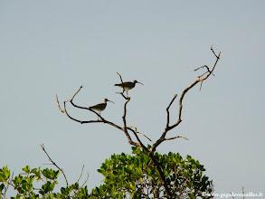 Photo: #024-Beaucoup d'oiseaux dans les bolongs