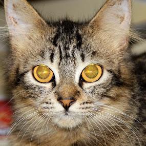 Ki Ki by Azman Jaeh - Animals - Cats Kittens