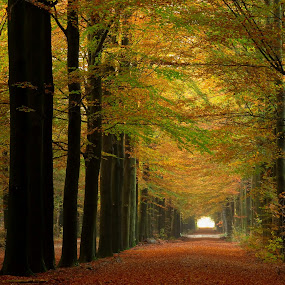 Autum by Gert de Vos - Landscapes Forests