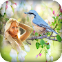 Birds Photo Frames APK icon