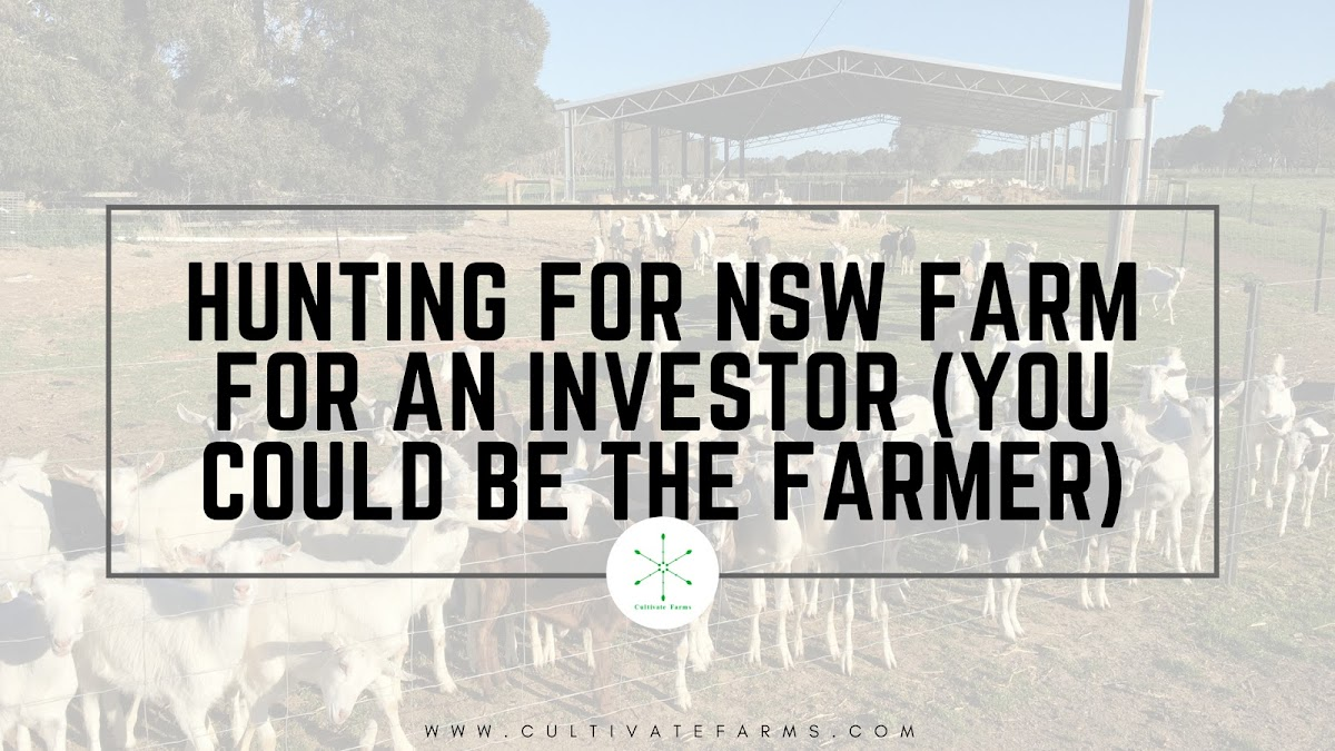 Hunting for NSW farm for an investor (you could be the farmer)