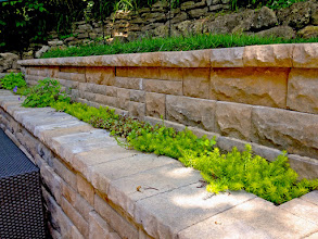 Photo: Plantings in little gaps like this have to be bullet-proof. Sedum is an excellent option like this 'Angelina' Stonecrop.