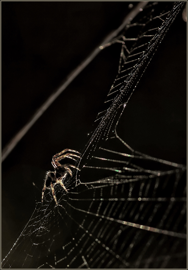 SPIDER RADIOGRAPHY di Carlolong