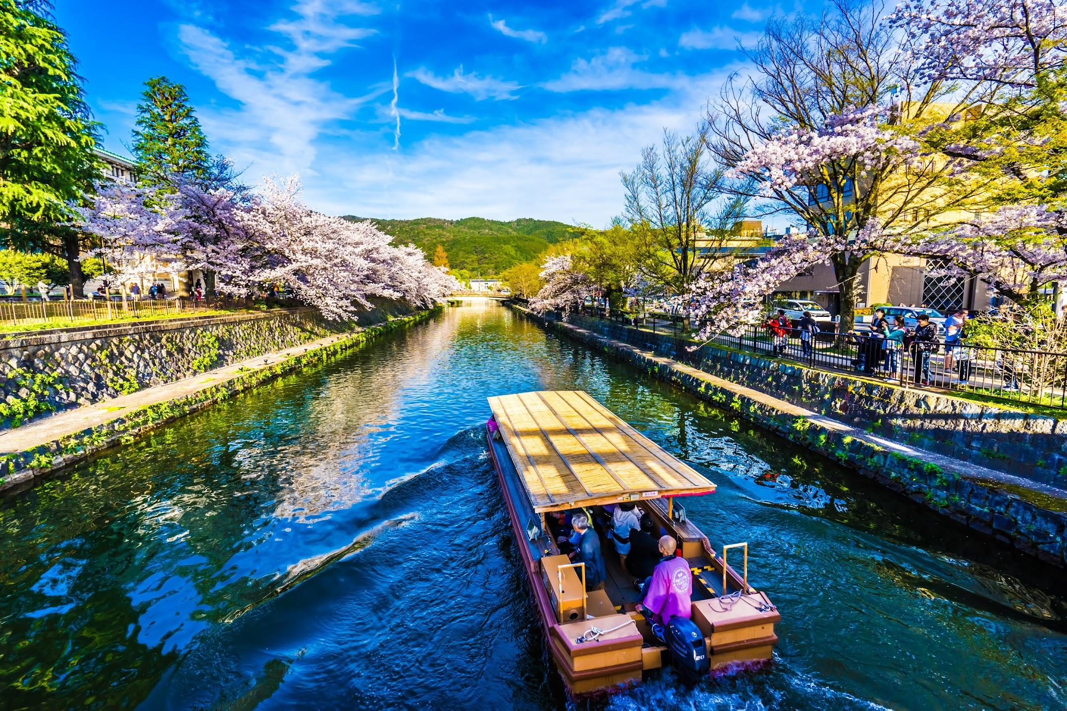 Kyoto okazaki canal cherry blossoms2