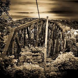 Bridge to the past by Deborah Murray - Black & White Buildings & Architecture ( nature, bridge, black and white, trees, architecture )