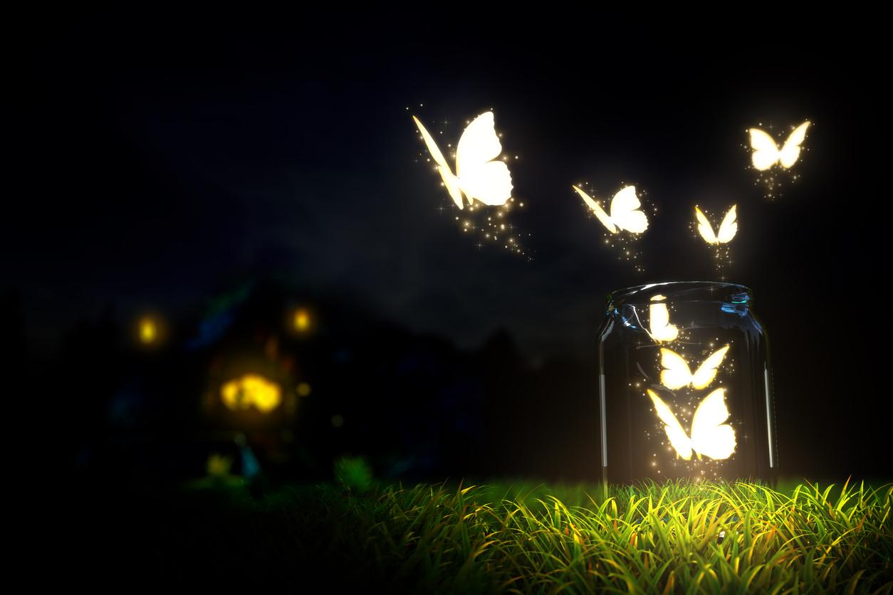 Transforme seu jardim em um conto de fadas com estas plantas noturnas
