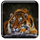 老虎动态壁纸 icon