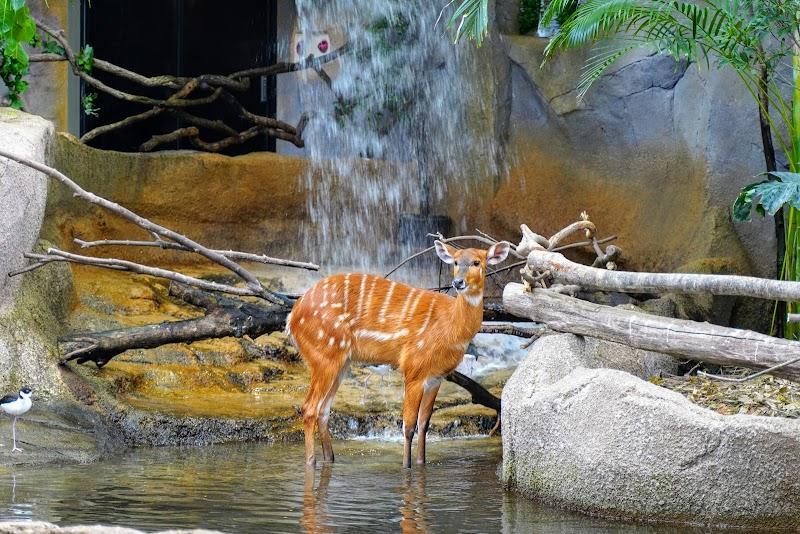 滝の前に立つ鹿