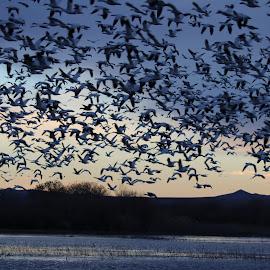 Morning liftoff by Lyn Simuns - Animals Birds