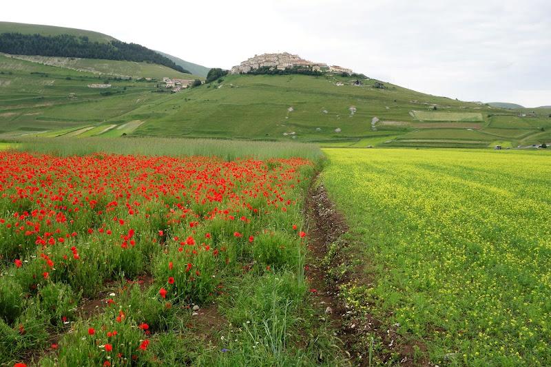 La valle felice. di matteo_maurizio_mauro