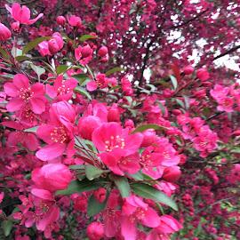 by Shree Raja - Flowers Tree Blossoms