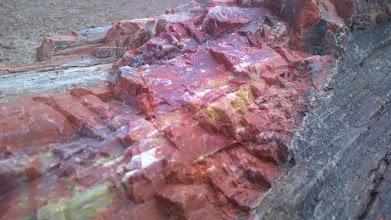 Photo: August 11-Petrified wood