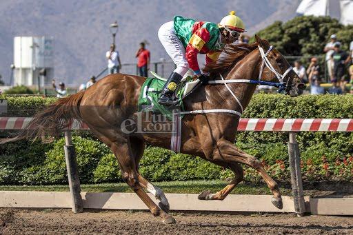 Tu Fortaleza (Passion for Gold) gana Condicional (1000m-Arena-HCH). - Staff ElTurf.com