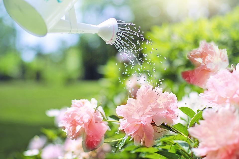 5 consejos para regar las flores adecuadamente