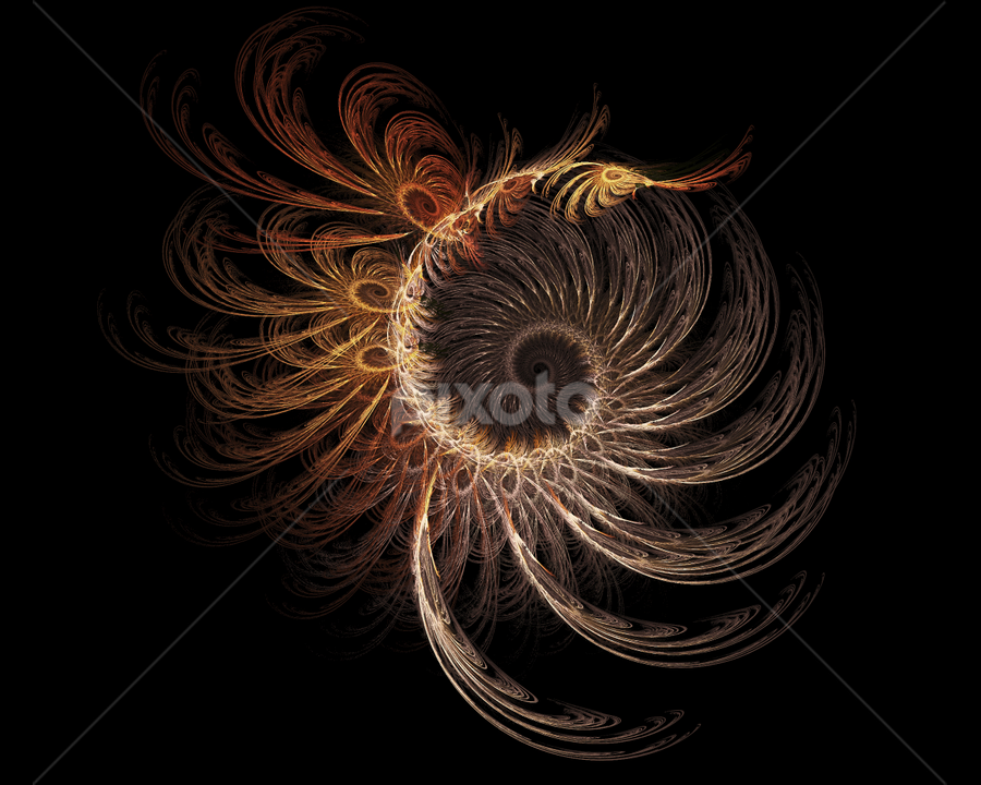 Abstract Shell by Cvetelina Todorova - Illustration Abstract & Patterns ( abstract, shell, apophysis, swirl, background, curl, line, digital, light, black, flame )
