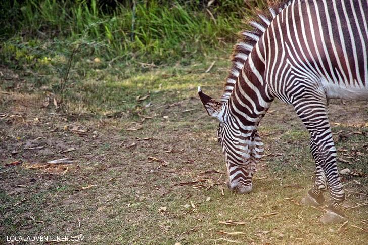 Taman Safari Indonesia.