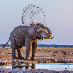 Mud Games by Sue Green - Animals Other Mammals ( water, botswana, mud, youngster, elephant, wildlife, dry season, africa, kalahari )