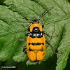 soldier beetle