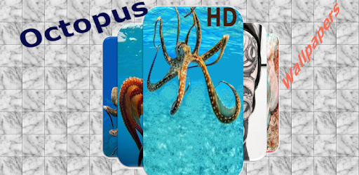 In this application you will find many of the nicest  wallpapers for octopus
