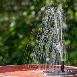 Bird Bath Fountain by Jerry Hoffman - Uncategorized All Uncategorized (  )