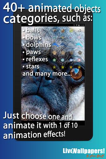 Pugs Live Wallpaper