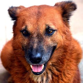 Bruno - Portrait. by Vinod Rajan - Animals - Dogs Portraits ( doggie, portraits, dogs, animal, animals, portrait, dog, portraiture, dog portrait,  )