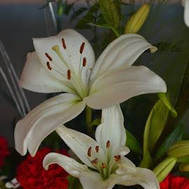 by Praveen Kulshreshtha - Flowers Flower Arangements