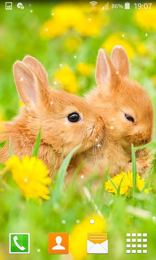 Rabbit Live Wallpapers  screenshots 1