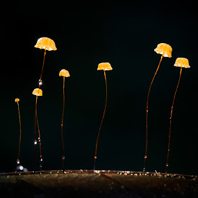 Night light by Tuan Pham - Nature Up Close Mushrooms & Fungi ( macro, forest, light, nature, night, mushroom )