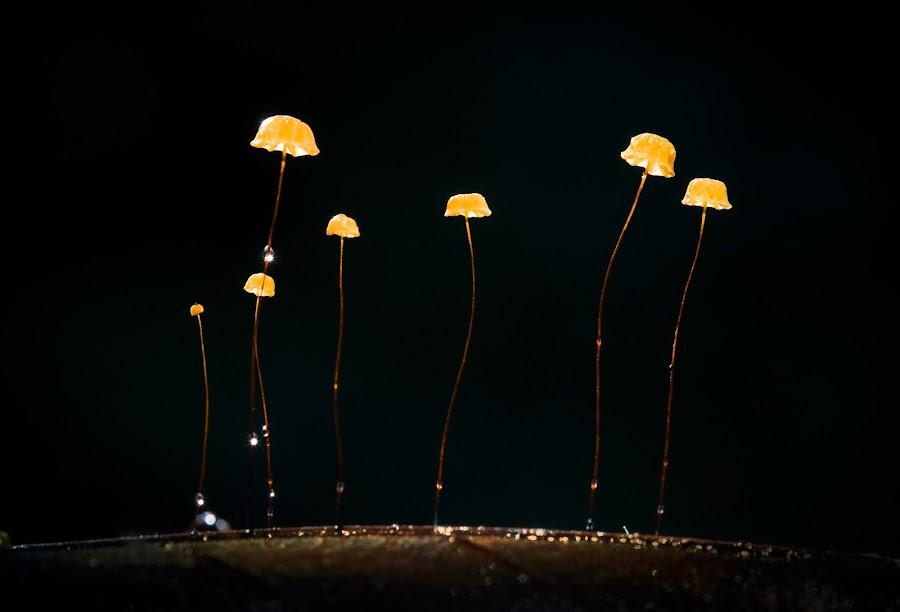 Night light by Tuan Pham - Nature Up Close Mushrooms & Fungi ( macro, forest, light, nature, night, mushroom )