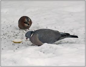Photo: 27. december 2010 - Store duer