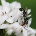 aqua tiny bee