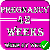 🆕 pregnancy stages