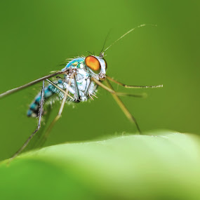 Shake hand please by Irwan Kairuman - Animals Insects & Spiders ( macro, fly, insect, closeup, animal )
