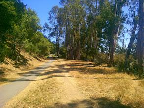 Photo: Eucalyptus dominated area.